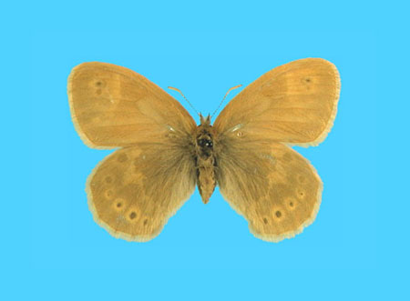 Specimen number 500343 - upperside