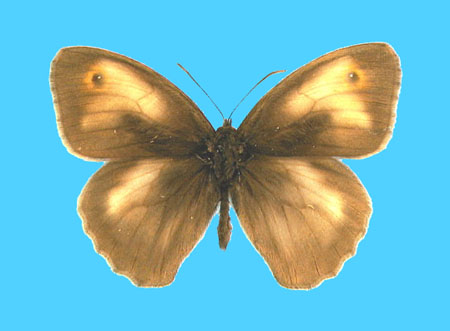 Specimen number 500494 - upperside
