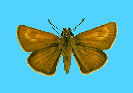 Specimen number 500600 - upperside