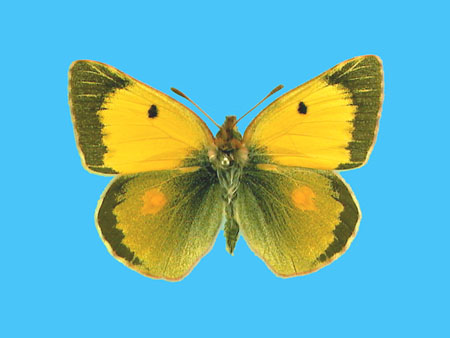 Specimen number 500878 - upperside