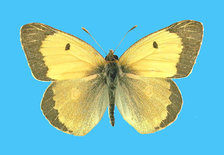 Specimen number 500900 - upperside