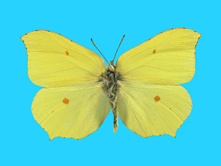 Specimen number 500904 - upperside