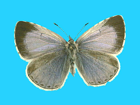 Specimen number 501063 - upperside