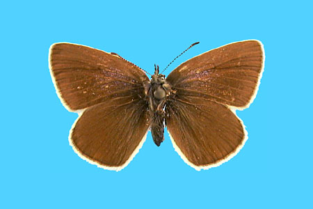 Specimen number 501308 - upperside