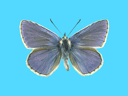 Specimen number 501312 - upperside