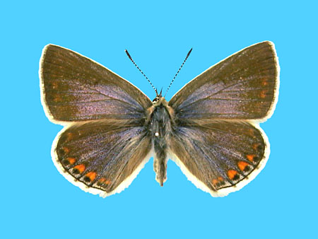 Specimen number 501380 - upperside