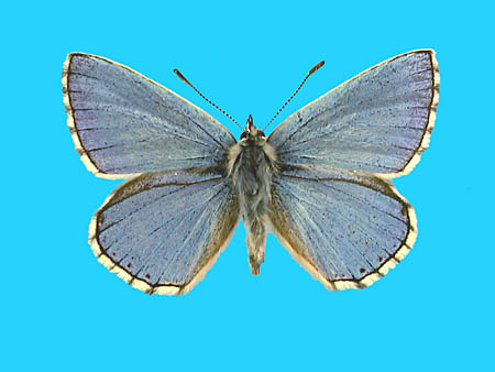 Specimen number 501411 - upperside