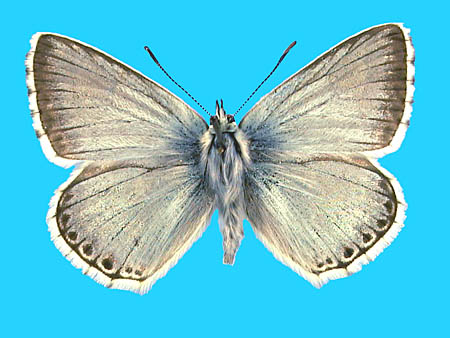 Specimen number 501468 - upperside