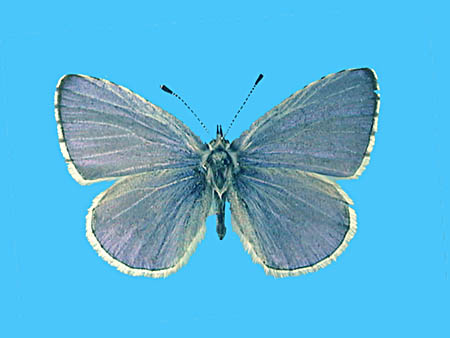 Specimen number 502111 - upperside
