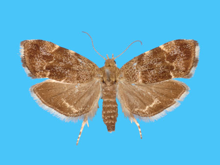 Specimen number 955890 - upperside
