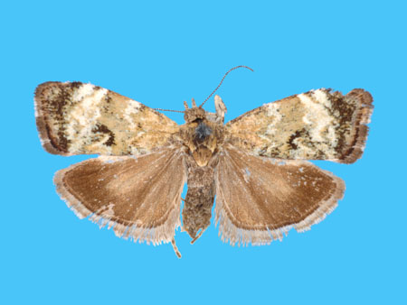 Specimen number 955898 - upperside