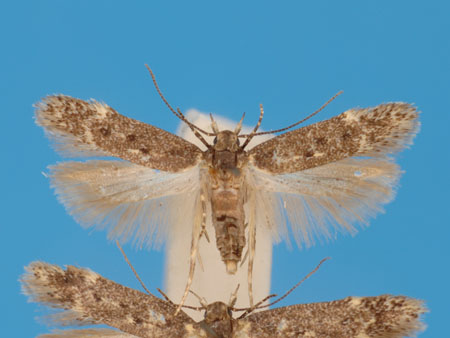 Specimen number 956701 - upperside