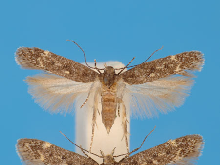Specimen number 956704 - upperside