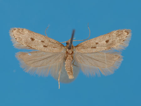 Specimen number 956709 - upperside