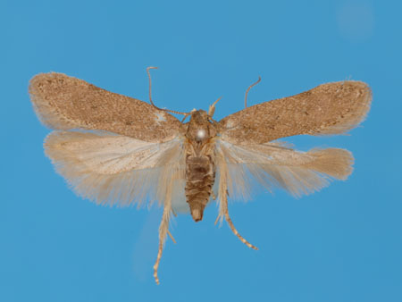 Specimen number 956712 - upperside