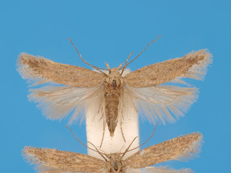 Specimen number 956715 - upperside