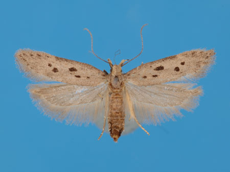 Specimen number 956732 - upperside