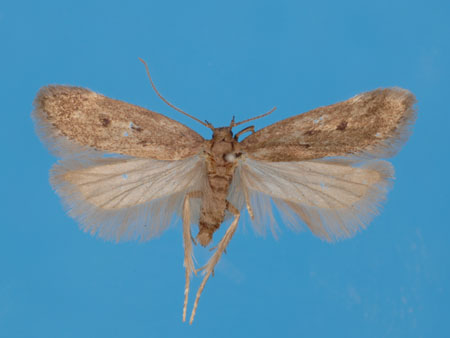 Specimen number 956733 - upperside