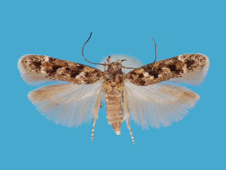Specimen number 956800 - upperside