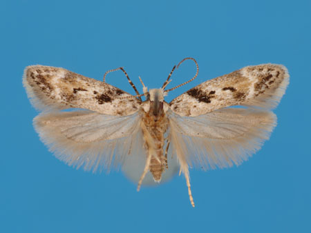 Specimen number 956811 - upperside