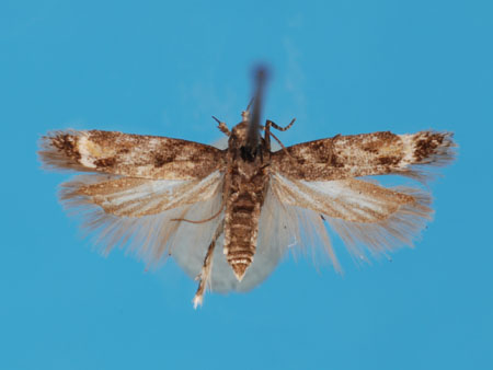 Specimen number 956816 - upperside