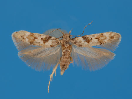 Specimen number 956819 - upperside