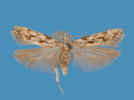 Specimen number 956820 - upperside