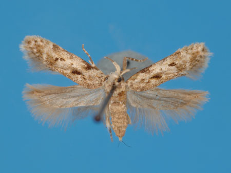 Specimen number 956821 - upperside