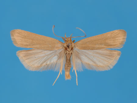 Specimen number 956858 - upperside
