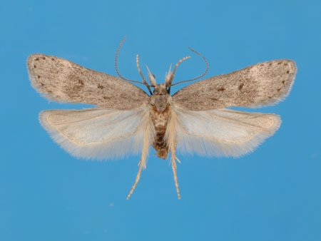 Specimen number 956874 - upperside