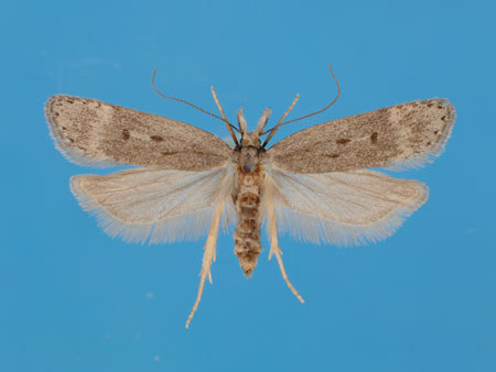Specimen number 956875 - upperside