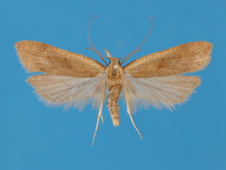 Specimen number 956877 - upperside