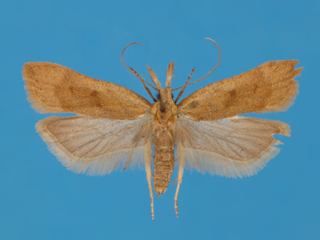 Specimen number 956878 - upperside
