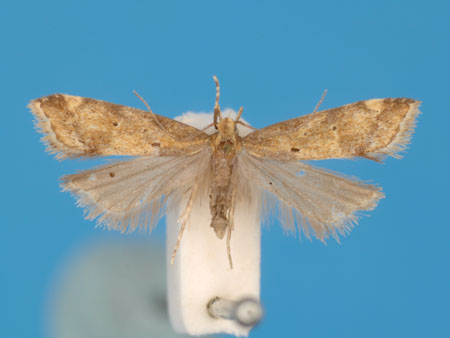 Specimen number 956879 - upperside