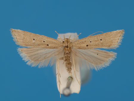 Specimen number 956882 - upperside