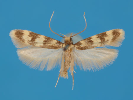 Specimen number 956887 - upperside