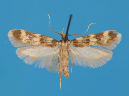 Specimen number 956888 - upperside