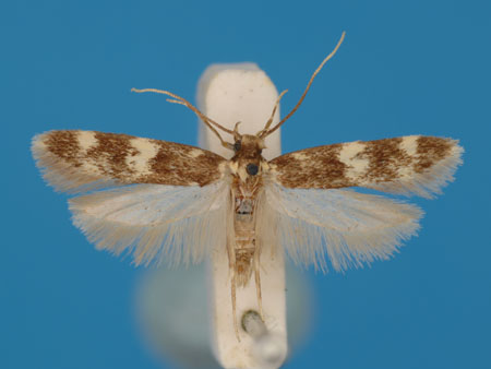 Specimen number 956889 - upperside