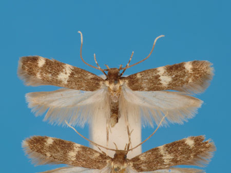 Specimen number 956891 - upperside