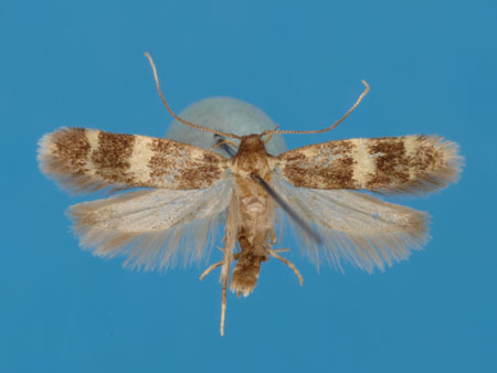 Specimen number 956892 - upperside