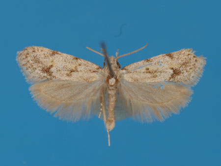 Specimen number 956893 - upperside