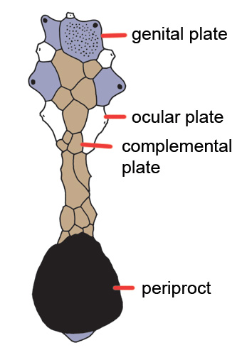 complemental plates