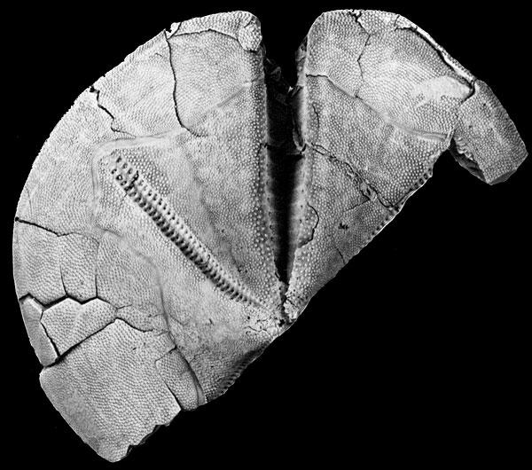 Natural History Museum Evolution Morphology