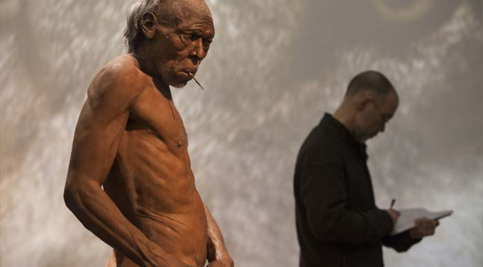 Homo sapiens model in the exhibition