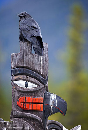 Raven icon by Vladimir Medvedev