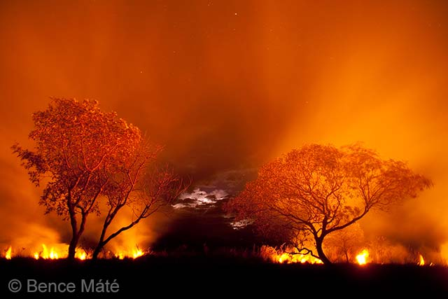 Fire on the Pantanal