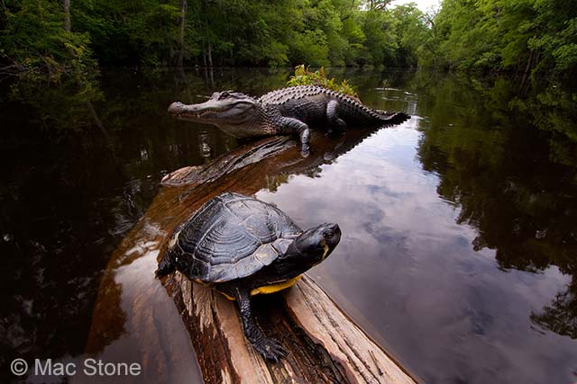Swamp heaven