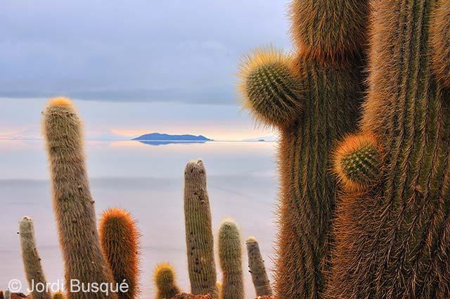 Salt-desert cacti