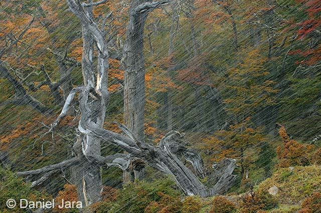 Patagonian woodscape