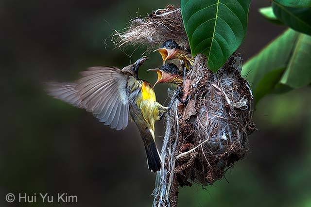 The sunbird brood